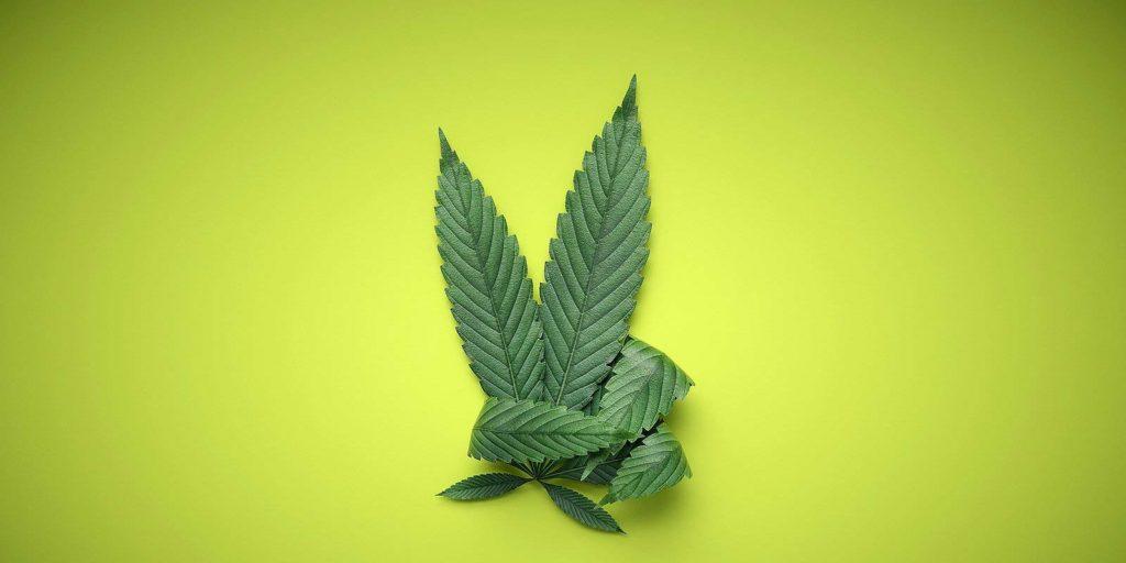 Marijuana leaf on green backdrop